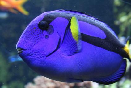 Requisitos de iluminación del tanque de arrecife