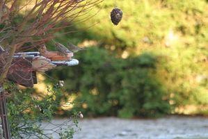 Cómo hacer alimentadores del pájaro con los niños preescolares