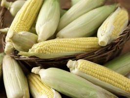 Las plantas utilizadas para producir etanol