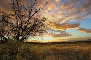 Ideas de la cesta del regalo en Nuevo México