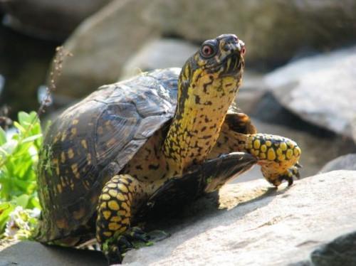 Las partes del cuerpo de una tortuga