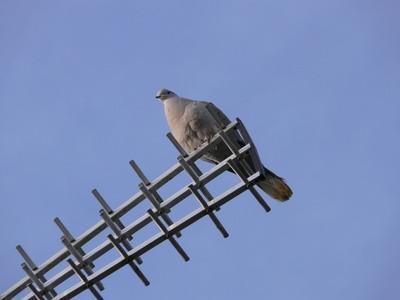 DIY de alta ganancia de la antena de 2 metros
