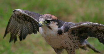Hawk Temas