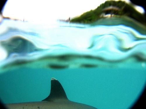 La comparación de tiburón y aletas de delfín