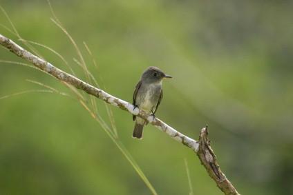 La identificación de Minnesota Bird