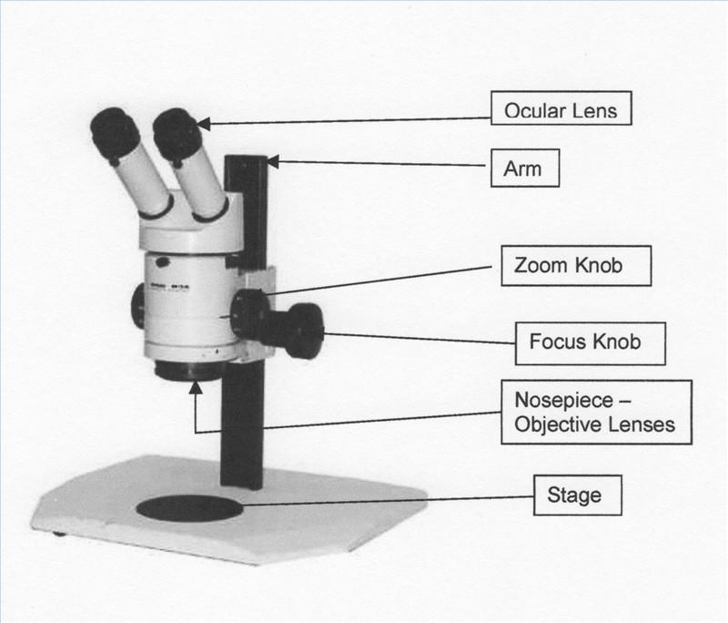 Definir microscopio de disección - Cusiritati.com