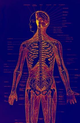 Comparar el sistema linfático al sistema circulatorio