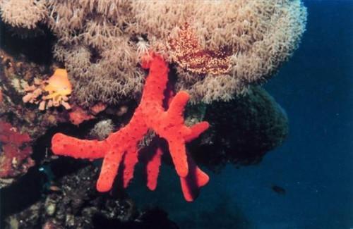 ¿Qué es la Red Coral?