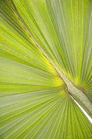 Las plantas nativas y la cola de milano Palms en Florida