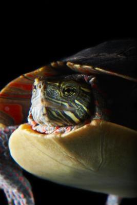 Aspectos singulares de los reptiles