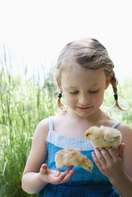Cómo hacer una incubadora casera para los polluelos