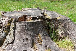 ¿Que significa deforestación?