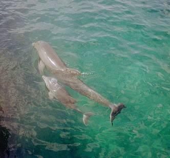 ¿De dónde delfines duermen?
