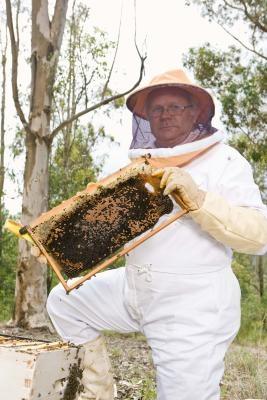 La puesta de huevos por la abeja reina