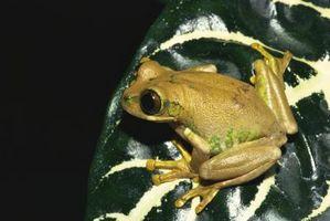 Similitudes y diferencias entre las ranas y sapos