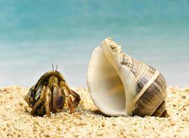 Proyectos de la ciencia con conchas de cangrejo ermitaño