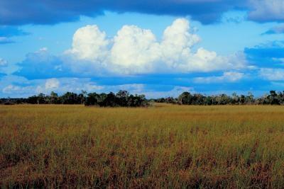 Los ecosistemas en la Llanura Costera