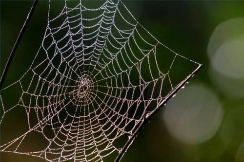 Datos sobre las arañas