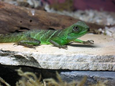 3 semejanzas entre los humanos y los reptiles