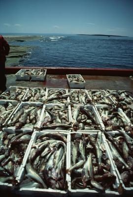 Cómo curar una piel de pescado