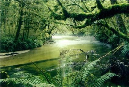 Información acerca del Tropical Trees
