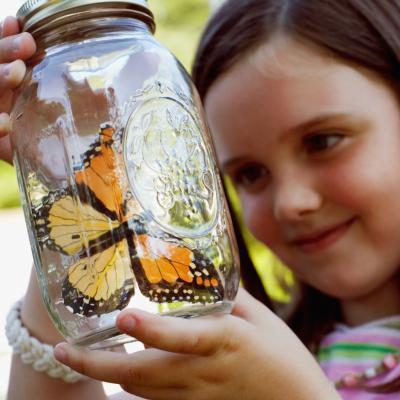 Cómo decirle a una mariposa macho de una hembra