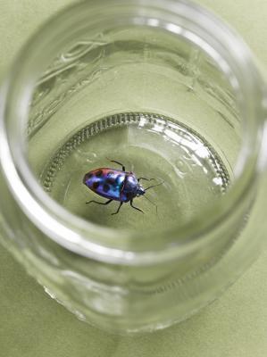 Cómo identificar los insectos que se encuentran en el hogar