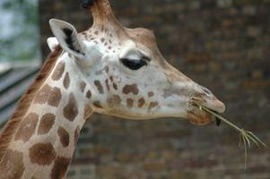 Safari regalos para bebés