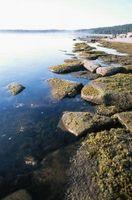 ¿Qué tipos de algas se cultivan en Colorado?