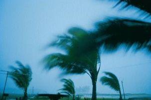 Juegos de huracanes de seguridad para niños