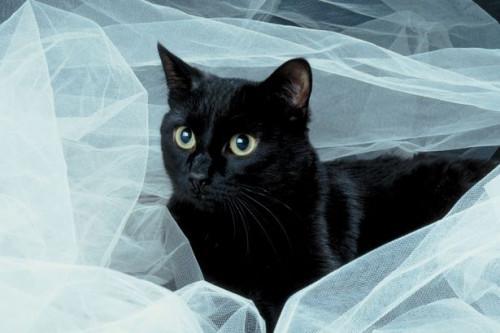 Negro Gatos Craft