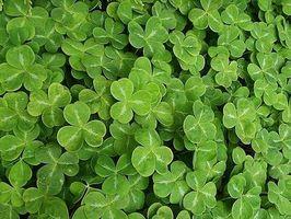 Acerca de los partidos del día de St Patrick