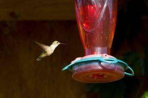 Cómo hacer Hummingbird Alimentos para Alimentadores