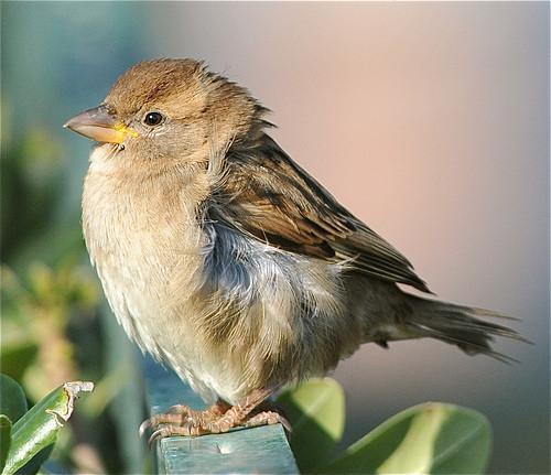 ¿Cómo hacen los pájaros masticar los alimentos?