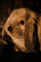 Regalos para la gente que ama conejos