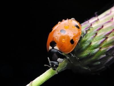 Los insectos que ayudan a los agricultores?