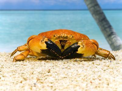 Cómo atrapar cangrejos en el Océano Pacífico