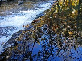 Hechos sobre el agua dulce Bioma
