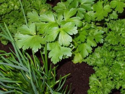 Juegos de identificación de plantas