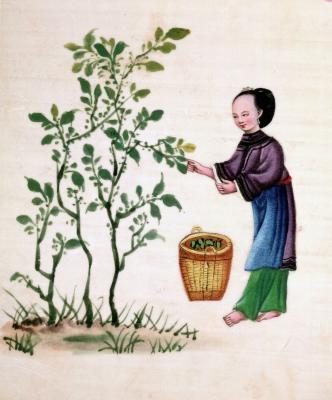 Diferencias entre las pinturas chinas y coreanas