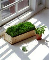 ¿Cuál es el origen de la palabra fotosíntesis?