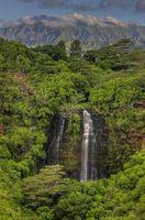 Las plantas de Hawai y sus usos