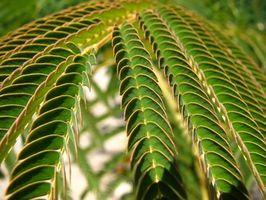Características del reino vegetal