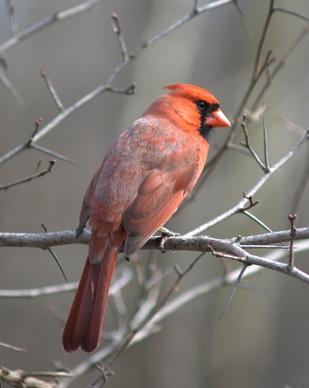 La identificación de Arizona Bird