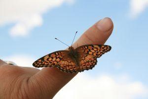 Cómo utilizar mariposas vivas en una boda