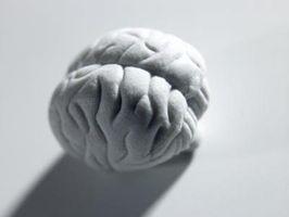 Cómo hacer un molde de cerebro Fuera de espuma de poliestireno