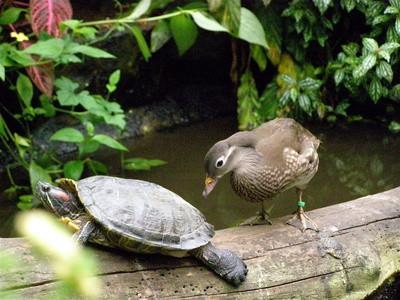 Las diferencias entre los reptiles y Pájaros