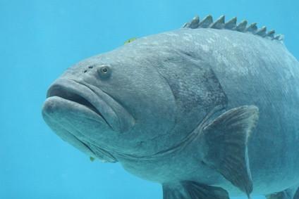 Cómo identificar las especies de peces de agua salada