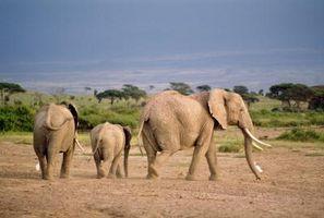 Importancia de la fauna y el ecosistema