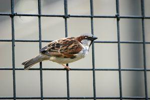 Instrucciones de fabricación casera Trampa de aves vivas